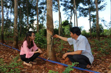 Anh Nguyễn Yên giới thiệu hệ thống thu gom mủ với phóng viên.