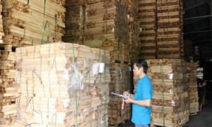 Chế biến gỗ tại Công ty CP Gỗ Dầu Tiếng. Ảnh: Bình Nguyên