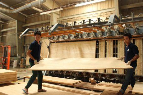Sản xuất tại Công ty CP Gỗ Dầu Tiếng. Ảnh: Bình Nguyên