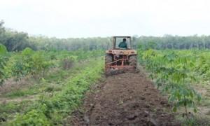 Nông trường sử dụng máy cày ngầm thay lao động thủ công trên vườn cây KTCB. Ảnh: Phan Thắng