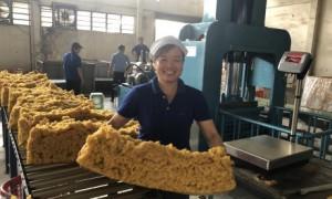 chị Nguyễn Thị Kiều Loan – công nhân Nhà máy chế biến Cua Paris, Công ty CPCS Phước Hoà