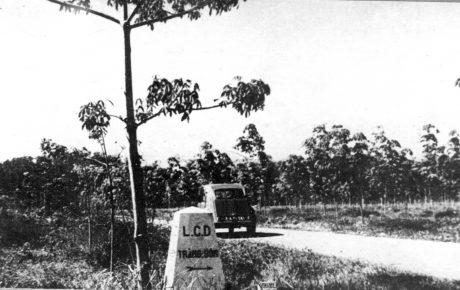 Lô cao su trồng tại đồn điền Trảng Bom.