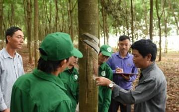 Cao su Phú Riềng điển hình trong phong trào luyện tay nghề – thi thợ giỏi