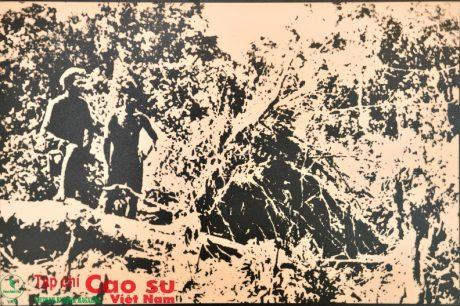 Thời kỳ đầu khai hoang trồng cao su của Pháp tại Việt Nam.