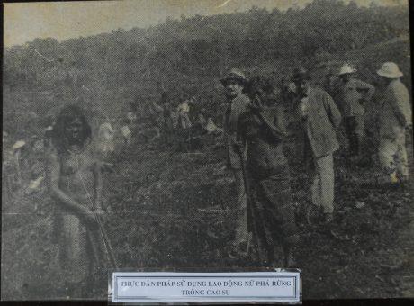 Thực dân Pháp sử dụng lao động nữ phá rừng trồng cao su