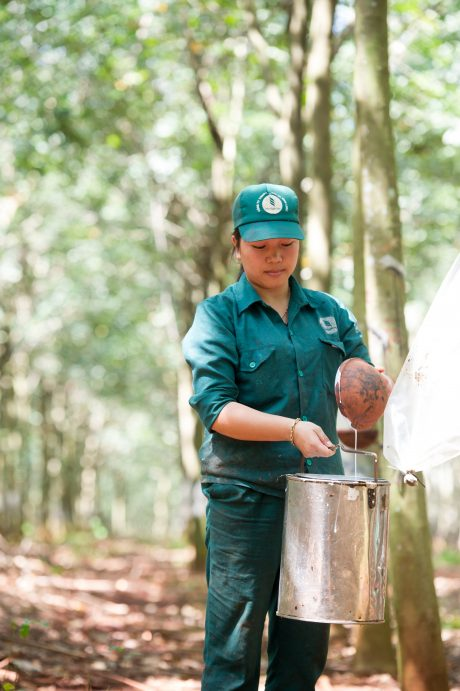 Công ty tập trung tăng cường quản lý vườn cây, thu hoạch hết mủ. Ảnh: Tùng Châu