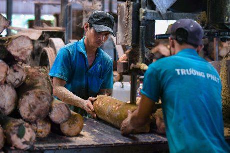Ngành gỗ chịu ảnh hưởng nặng nề bởi dịch Covid - 19 (ảnh tư liệu). Ảnh: Đặng Mi Rô