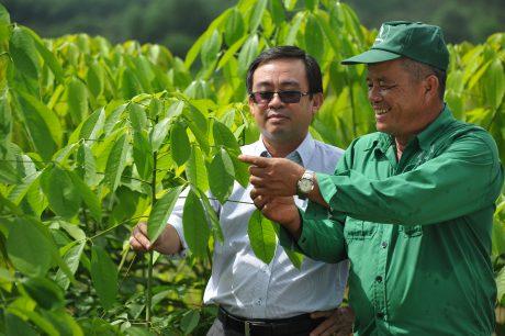 Cao su Đồng Nai phấn đấu đưa năng suất vườn cây lên 2 tấn/ha vào năm 2023. Trong ảnh: Ông Đỗ Minh Tuấn - TGĐ công ty kiểm tra vườn giống. Ảnh: Tùng Châu.