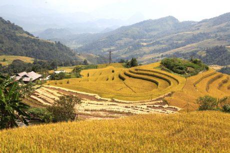 Sắc vàng bao phủ bên các sườn núi ở Hà Giang