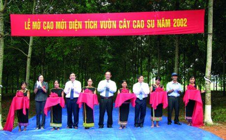 Mở cạo mới vườn cây cao su năm 2002 của công ty.