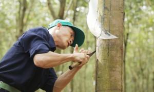Công đoàn công ty chấm điểm vườn rau gia đình anh Hoàng Văn Nam – Trung tâm y tế