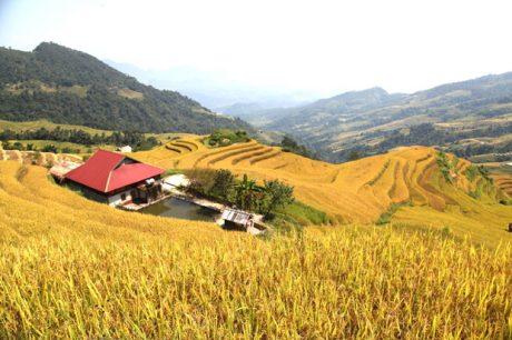 Mùa vàng tạo nên cuộc sống no ấm của đồng bào các dân tộc.