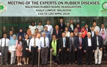 Phát hiện 2 bệnh mới trên cây cao su tại Indonesia và Malaysia