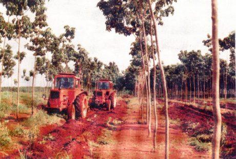 Máy cày MTZ của Liên Xô đang chăm sóc vườn cây Cao su Phú Riềng